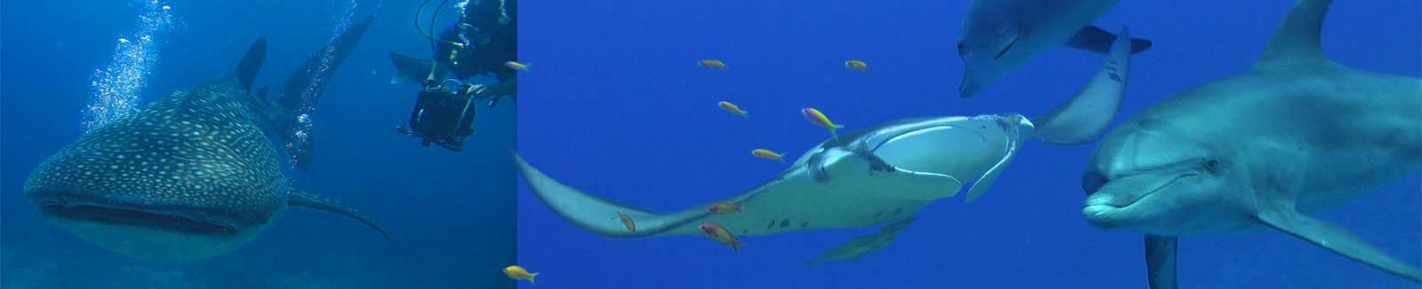 unterwasser kameramann  Bluewaterfascination und Großfische