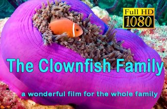 – The Clownfish Family –