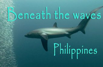 – Beneath the waves –