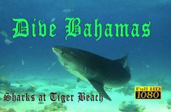 – Dive Bahamas –