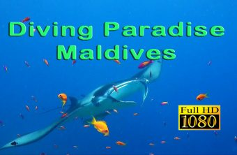 – Diving Paradise Maldives –