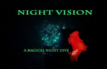 – Unterwasserfilm Nachttauchen –