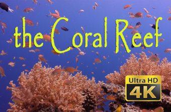 – Tauchfilm Korallenriff –