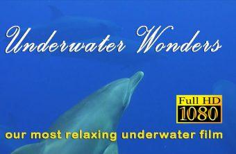 – Tauchfilm Unterwasser Wunder –