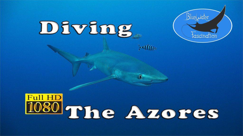Tauchen auf den Azoren