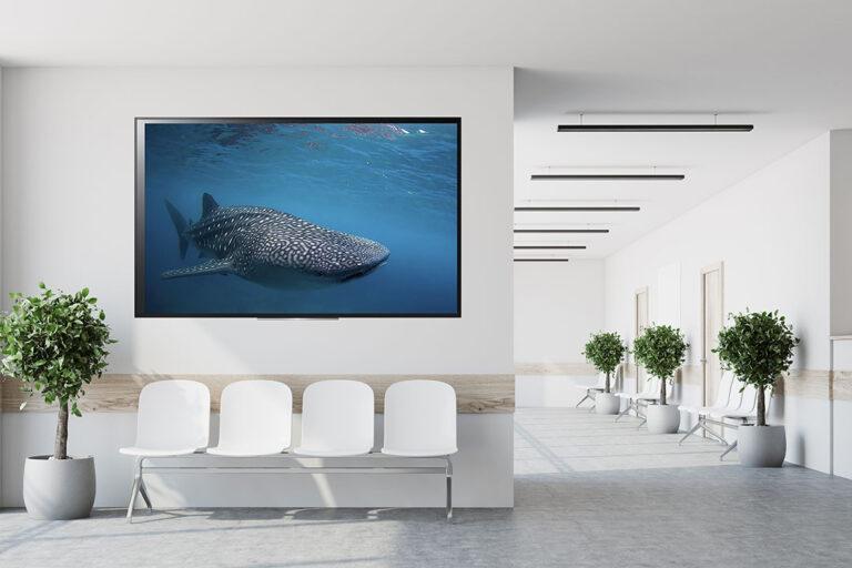 Unterwasser Filme zur Entspannung von Bluewaterfascination